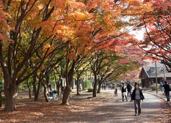 Tokyo: best places to visit