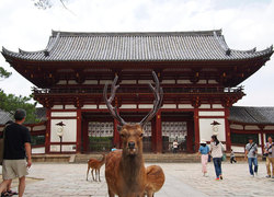 Mysterious Nara, the ancient Buddhist temples of Japan